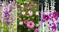 Ezeknek a régi virágoknak a te kertedben is helyük van!