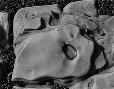 Edward Weston, Point Lobos (50R), 1930, Photography West Gallery