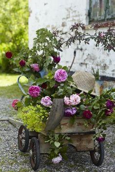 Zinnias, Petunias, Flower Farm, Flower Pots, Grandmas Garden, Pink Tulips, Spring Garden, Vintage Flowers, Potted Plants