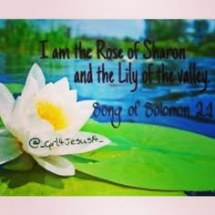 Song of Solomon 2:1, I am the Rose of Sharon and the Lily of the valley.