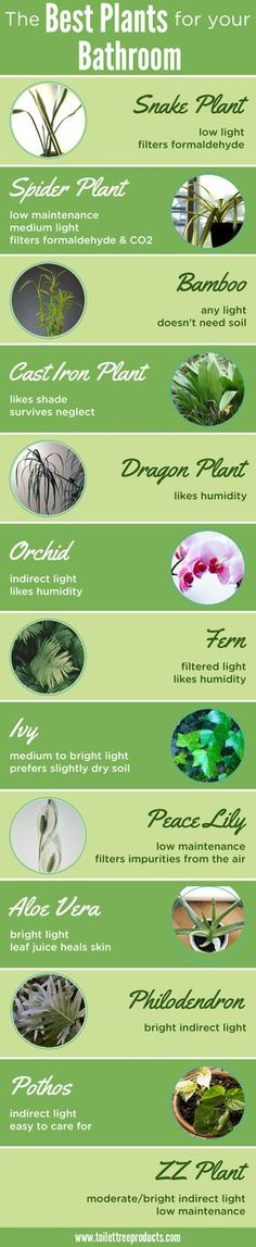 The best plants for your bathroom