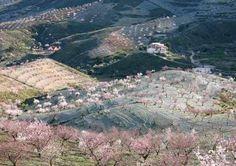 Los pueblos del Jerte: una ruta por el valle de las cerezas.