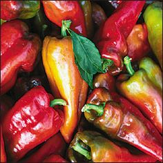 Pepper Hot Jalapeno Beaver Dam- Heirloom- Origin Hungarian found in WI- This variety is a milder Jalapeno when seeded. Use in the following sandwiches, stuffed, crunchy, and excellent flavor. Medium hot Jalapeno  Heat 2,500-8,000