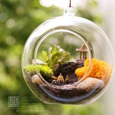 freeshipping Crystal transparent glass ball flower bryophytes meat flower pot totoro bryophytes plant bonsai
