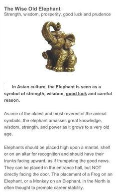 Tattoo Elephant Meaning Tat 18 Ideas For 2019 Elephant Spirit Animal, Elephant Quotes, Elephant Facts, Elephant Tattoos, Image Elephant, Elephant Meaning, Elephant Love, Animal Symbolism, Elephant Symbolism