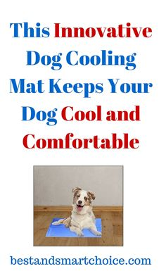 This gel mat comes in perfect size that will insure that your pet is really comfortable either indoor or outdoor. This is soft and very easy to...continue reading by clicking here --> http://bestandsmartchoice.com/2015/09/this-innovative-dog-cooling-mat-keeps-your-dog-cool-and-comfortable/