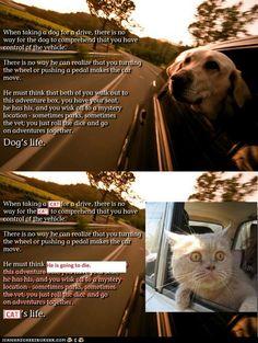 dog's life / cat's life