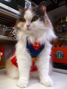 Super cat Syrup.2011