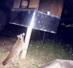 1000 Images About Raccoon And Possum Proof Cat Feeders On