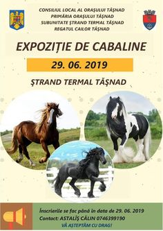 EXPOZIȚIE DE CABALINE LA TASNAD Sport, Memes, Movie Posters, Deporte, Sports, Meme, Film Poster, Billboard, Film Posters