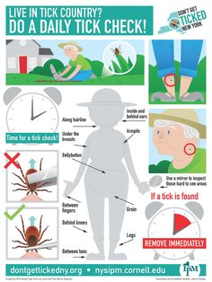 ticks new york state integrated pest management - 236×314