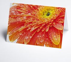 #Grusskarte mit Detailbild #Gerbera in orangerot Gerbera, Fruit, Gift Cards, Invitation Cards, Xmas Cards, Invitations, The Fruit