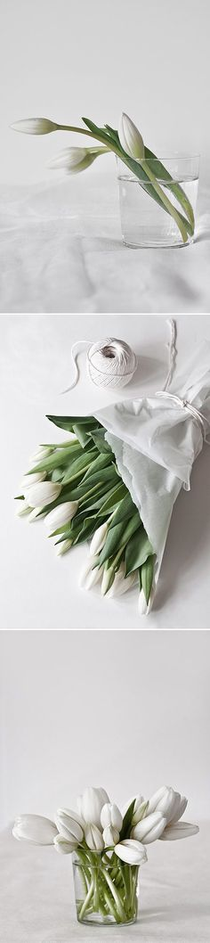 white tulips from mo+mo living