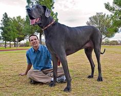 Giant George measures a staggering 7 feet three inches when standing on his hind legs.