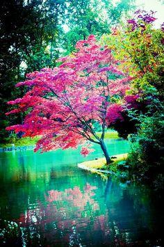che bei colori