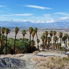 Caliparks : Indio Hills Palms
