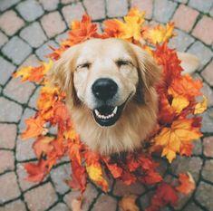 Autumn smiling dog