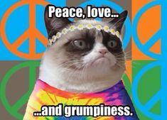 8 Super Tips to Make Your Grumpy Cat Happy! - Peace love and grumpiness. The post Grumpy Cat? 8 Super Tips to Make Your Grumpy Cat Happy! appeared first on Gag Dad. Grumpy Cat Quotes, Funny Grumpy Cat Memes, Funny Cats, Funny Animals, Cute Animals, Grumpy Cats, Funny Animal Pictures, Animal Memes, Cute Cats