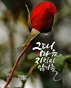Morning Words, Good Morning, Korean Quotes, Great Words, Calligraphy, Happy, Buen Dia, Lettering, Bonjour