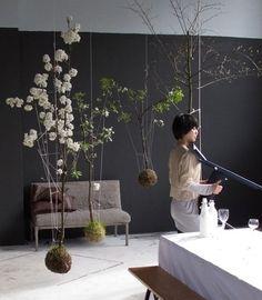 que tal decorar sua sala com plantas penduradas?