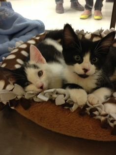 McGee & Tony: NCIS Special Agent kittens :-)
