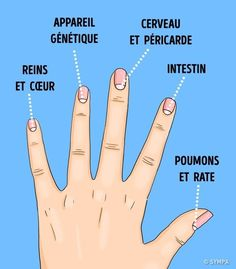 health beauty remedies The Moons on Your Nails Can Warn You About these Possible Health Problems - Have you ever noticed those light areas at the base of your fingernails? Those are called moons or lunula. A lot of us don't really pay attention to them o Health And Beauty, Health And Wellness, Health Tips, Health Fitness, Massage Benefits, Health Benefits, Moons On Fingernails, Herbal Remedies, Health Remedies