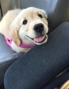 (2) If you are having a bad day, here are some puppies - Album on Imgur