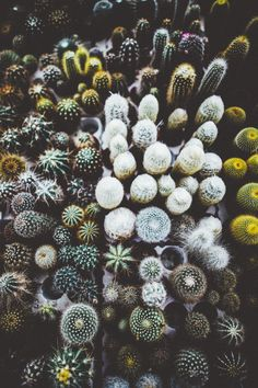 elenamorelli:{ cacti love! }