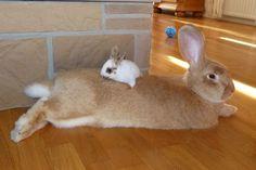 Bunny bed! #rabbits #bunnies