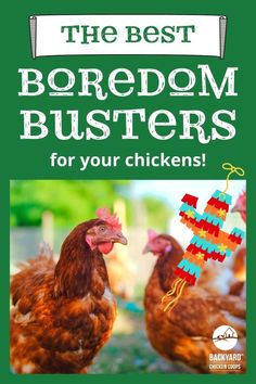 While chickens are quite creative when it comes to keeping themselves entertained - free-ranging is their forte! In the winter months, when the days are shorter and there aren't as many exciting bugs, weeds and grasses to peck at, chickens can become bored. And bored chickens are definitely not happy chickens. If you want to learn how to keep your chickens amused, try these boredom busters! Chicken Coop Decor, Chicken Toys, Backyard Chicken Coops, Chickens Backyard, Things To Come, Good Things, Boredom Busters, Entertaining, Grasses