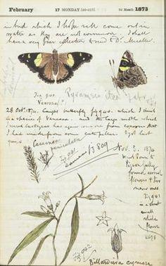 Fieldnotes - field naturalist, Charles Mash Maplestone, Victoria 1875-1880 (Museum Victoria)