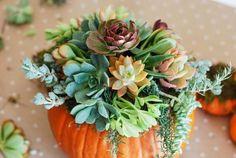 Halloween Decor: Un centro de mesa con calabazas y suculentas