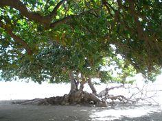 Boavista Capo Verde 02/2007