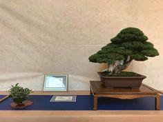 25 Best Bijutsu Bonsai Zu Vol 2 Thanks Nbf Images Bonsai