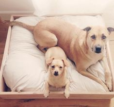 Are You Ready to Get a Dog? {click to find out}