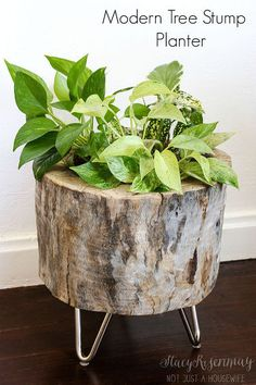 modern tree stump planter, diy, gardening, home decor