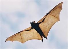 Thomson Ecology: News - Winged Wonders - The Ultimate Guide To Bats