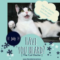 Great news - The Cat Doctor Ventura is now open on Saturdays! www.thecatdoctorventura.com