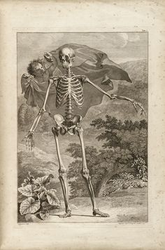"""Table I (Human Skeleton),"" by Bernhard Siegfried Albinus (1747)"
