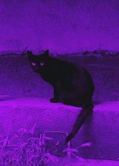purple, cat, and mysterious kép