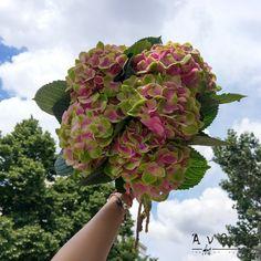 Hydrangea M Mag Amethyst Υπέροχες Ορτανσίες σε ένα μοναδικό χρώμα που τις κάνει ακόμη πιο εντυπωσιακές ! #Flowers #anthos #instapic #hydrangea #flower #freshflowers #green #thessaloniki #pink #anthosthessaloniki #uniquecolour #louloudiathessaloniki Plants, Plant, Planets