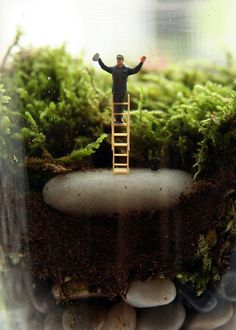 Twig Terrariums - http://twigterrariums.com