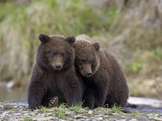 Brown Bears. We should meet..From a distance.