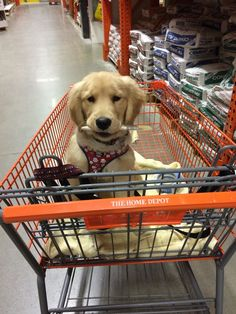 They're very helpful shopping companions.
