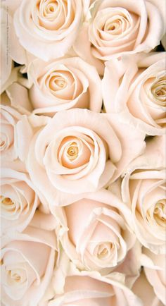 Flowers wallpaper for phone iphone backgrounds pink roses super ideas White Roses Wallpaper, Ps Wallpaper, Trendy Wallpaper, Flower Wallpaper, Wallpaper Backgrounds, Wallpaper Iphone Gold, White Roses Background, Cream Wallpaper, Iphone Backgrounds