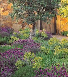 Designs 4 Living: Wild Lavender Landscaping