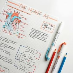 The heart is probably one of my favourite topics in biology – what's yours? – … The heart is probably one of my favourite topics in biology – what's yours? Nursing School Notes, College Notes, Medical School, School Organization Notes, Study Organization, Pretty Notes, Cute Notes, Study Biology, Science Notes