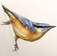 Nature Sketch, Great Week, Birdwatching, Sketch Art, Bird Art, Pencil Art, Watercolor Painting, Layering, Van