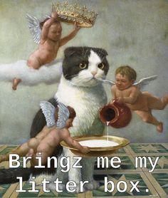 Little boss | http://unusual-cats.com/little-boss/
