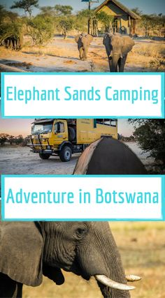 Elephant Sands Camping Adventure in Botswana. Bush camping with wild elephants. While setting up camp we literally watched huge African elephants with massive tusks walk meters from our tents to the central waterhole at the campground. Click to read more at http://www.divergenttravelers.com/elephant-sands-camping-adventure-botswana/